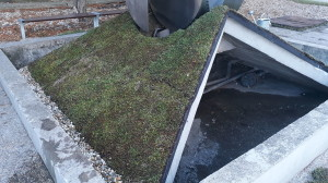 zmena bezónového povrhu na vegetačný