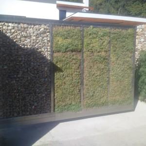 vegetačný múr + kameň v gabióne